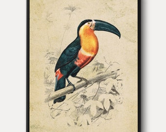 Toucan WALL ART - Large Bird Canvas, Vintage Animal Print, Nature Wall Decor, Animal Portrait Painting, Antique Lithograph, Framed/Unframed