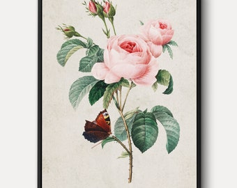 Cabbage Pink Rose WALL ART - Large Flowers Canvas, Vintage Plants Print, Nature Wall Decor Painting, Antique Lithograph Art, Framed/Unframed