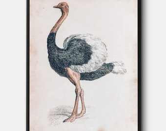 Ostrich WALL ART - Big Bird Canvas, Vintage Animal Print, Nature Wall Decor, Giant Modern Wall Art Bird Poster, Wildlife Ostrich Painting,