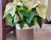 Cotton Jute Rope Seamed Plant Basket, Indoor Planter, 8 quot x 7.5 quot