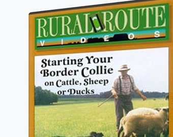 Starting Your Border Collie on Cattle, Sheep and Ducks
