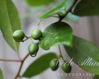 Rain Drops | Nature Photography | Digital Download