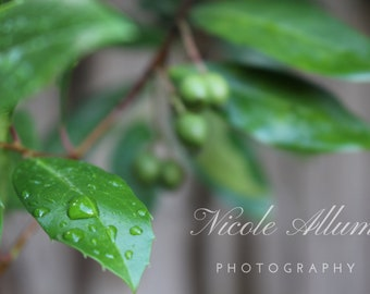 Raindrop on Leaf | Digital Download | Nature Photography