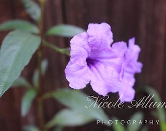 Purple Flower Printable Art | Nature Photography | Digital Download
