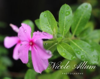 Set of Two Pink Flowers | Printable Wall Art | Nature Photography | Digital Prints