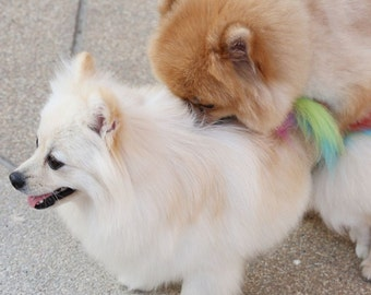 Dog Pairing Calendar 2022