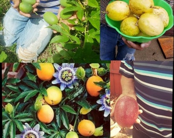 Passion fruit 4 types of live plants .package of four floors 1 purple 1 yellow 1 orange and 1 white
