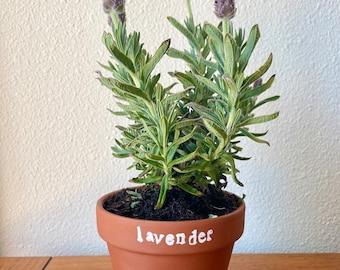 Lavender Homegrown Flower Kit