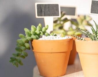 Succulent/cactus favours/bomboniere, weddings, birthdays, celebrations
