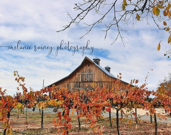 Fall Wine Country Print, Amador County, Barn Photography, California Landscape, Autumn, Wine Country, Wine Valley Art, Vineyard Picture