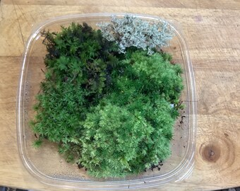 Captivating Woodland Moss