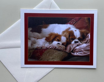 Cavalier King Charles Spaniel Dog Card with envelopes blank inside—Set of 5 (4.25 x 5.50), Greeting Cards for any occasion