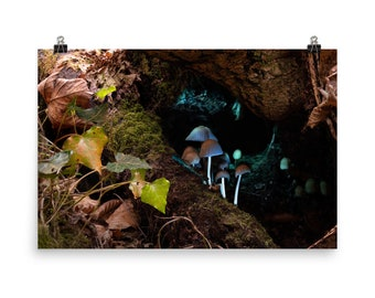 Mica Cap Mushrooms