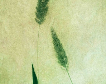 Green Grass Floral Botanical Limited Edition Print or Ready to Hang - Custom Sizes - Art Panel - Floral canvas -bedroom and lounge wall art