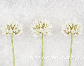 Floral limited edition wall art print-Shabby chic Floral fine art print with three White flowers -Custom made-Unframed or ready to hang