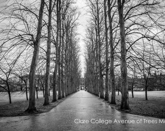 Clare College Cambridge University Trees Shadows Wall Art Prints-Black and White Limited Edition Unframed or Ready to Hang-Canvas-Art Panel