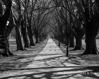 Jesus Green Trees and Shadows Wall Art Prints-Cambridge-Black and White Limited Edition Unframed or Ready to Hang Art-Canvas-Art Panel