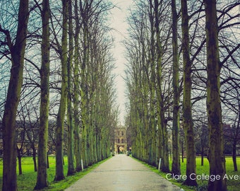 Clare College Cambridge University Avenue of Trees Wall Art Prints-Limited Edition Unframed or Ready to Hang-Canvas-Art Panel