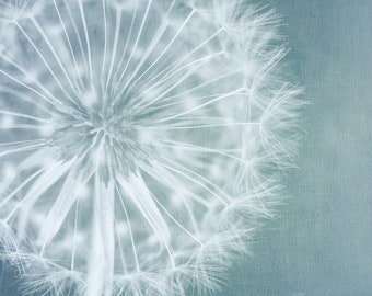 Dandelion print and wall art in custom sizes and finishes-limited edition prints unframed or ready to hang as art panel, canvas and boxframe