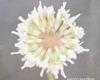 Floral Limited Edition unframed print and ready to hang wall art in custom sizes-art panel, canvas, box frame-bedroom and lounge wall art