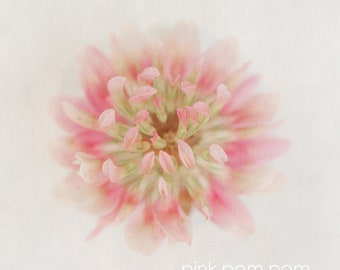 Pink White Floral Botanical  Limited Edition Print or Ready to Hang - Custom Sizes - Art Panel - Floral canvas -bedroom and lounge wall art