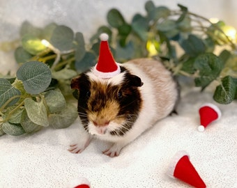 Guinea pig Christmas Santa hat