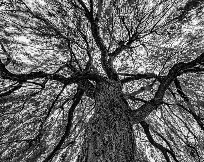 Inside the Weeping Willow Tree Mendous Wall Art Canvas - Wall Decor Landscape Print - Beautiful Tall Abstract British B&W Night Photo