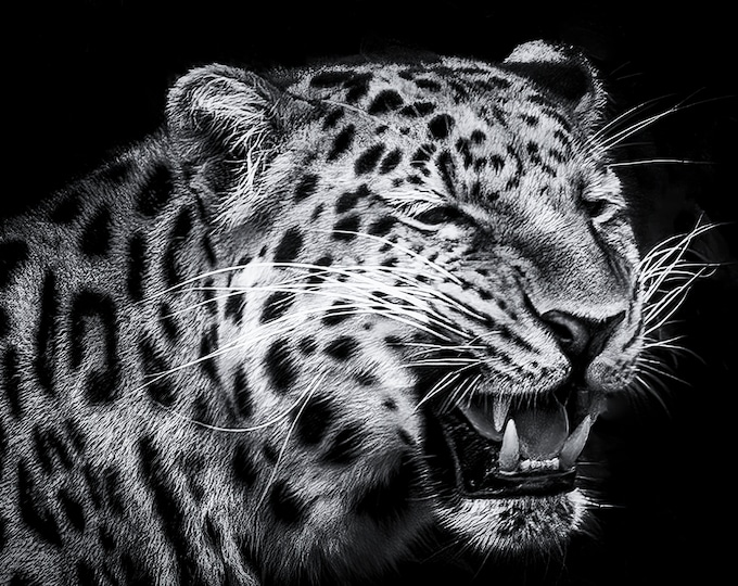 Leopard Black and White Canvas Print Master Of Photography