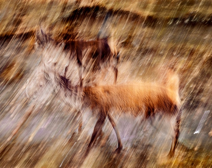 I Have No Eye Deer (Two) - Abstract Canvas Print Glencoe Scottish Highlands Unique Master Of Photography