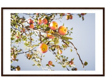 Apples on Apple trees in Autumn in Germany / harvest / nature / sky - Premium Matte Paper Wooden Framed Poster