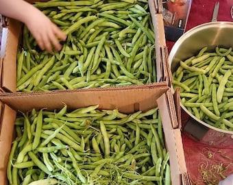 Short Stalker Green Bean Seeds