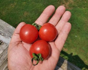 Mega Marlee Cherry Tomato SEEDS