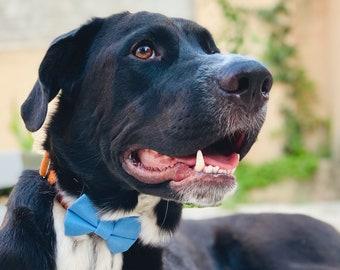 Handmade Dog, Cat, Pet, Bow Tie, Dickie Bow, Pet Accessories, Cornflower Blue, Slip On Collar, 5 Sizes by Umlaut