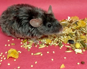 Mouse Trail Mix