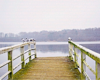 Digital download png file, landscape photography, jetty jetty, with seated seagulls on a lake