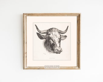 Vintage drawing cow French sketch art print rustic farmhouse country decor