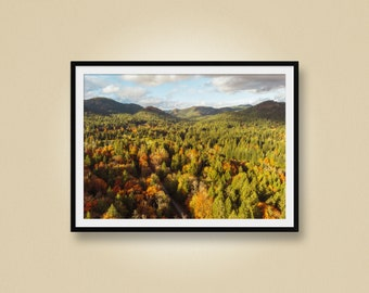 Aerial Photo of a Forest in Autumn with Mountains, Drone Photo, Sooke, Vancouver Island, British Columbia, Canada