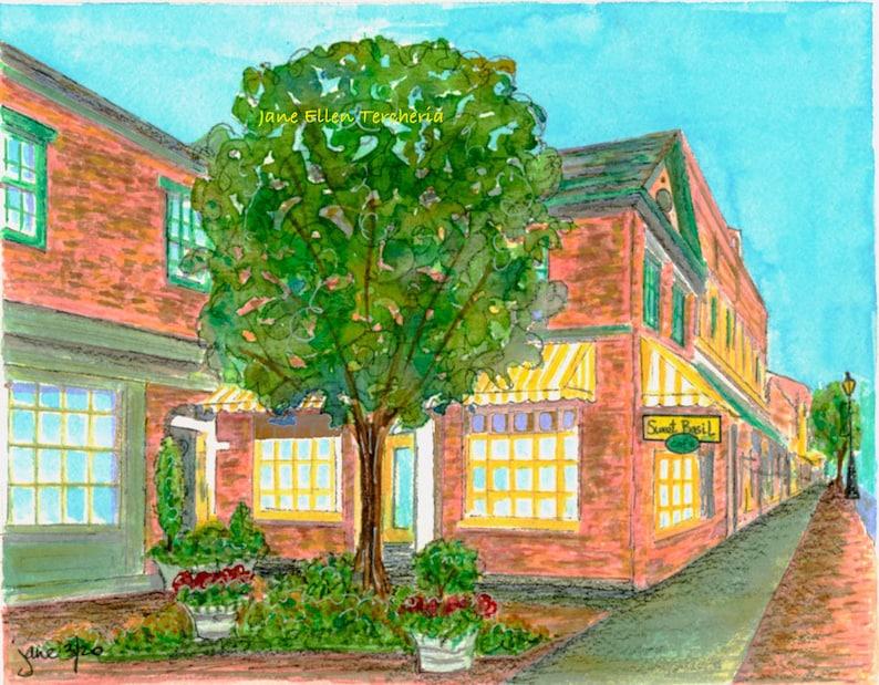 Sweet Basil NC Southern Pines