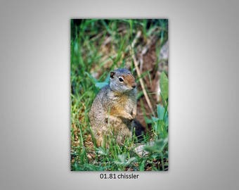 01.81 Chisler Limited Edition, Signed and Numbered 8x10 Image