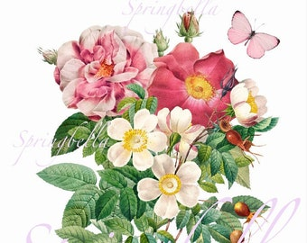 Redoute Flowers Bouquet | Printable | Roses | Wall Decor | Digital Download | Clipart | Transparent PNG File | Card Making