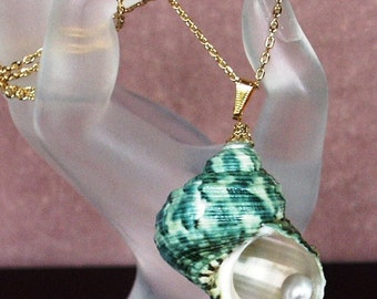 Green Turban Shell and Silver Freshwater Pearl Pendant with Gold Plated Chain