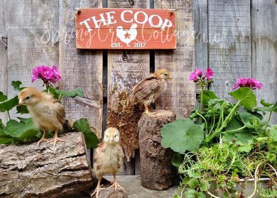 Coop Rustikal Bauernkuche Etablierten Zeichen Chicken Coop Etsy