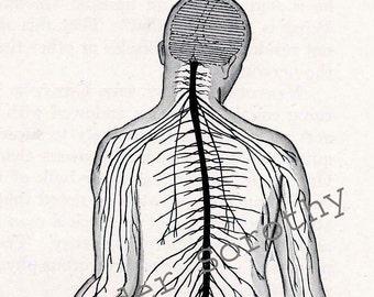 Cross-Section Human Head Brain Anatomy Lithograph