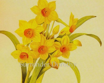 Narcissus Tazetta Flowers Bouquet Vintage Illustration Wildflower Lithograph Redoute Botanical Print To Frame 18
