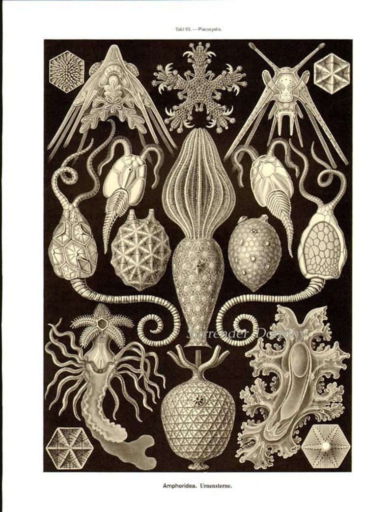 Sea Worms Chaetopoda Haeckel Print Vintage Natural History Oceanography Victorian Scientific Lithograph To Frame