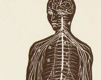 Nervous System Human Anatomy Anterior View Scientific Medical Chart To Frame 1920s Black & White