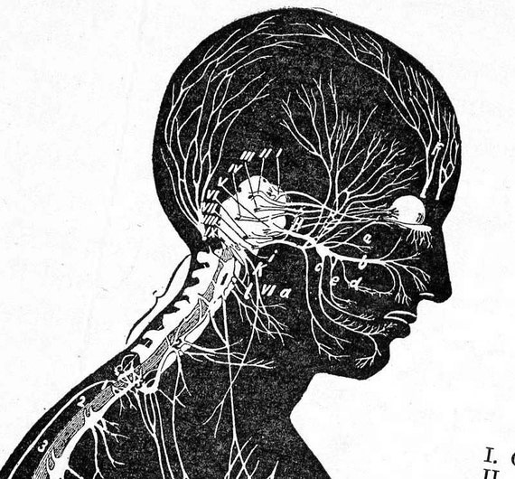 Nervensystem menschlichen Anatomie Profil Ansicht | Etsy
