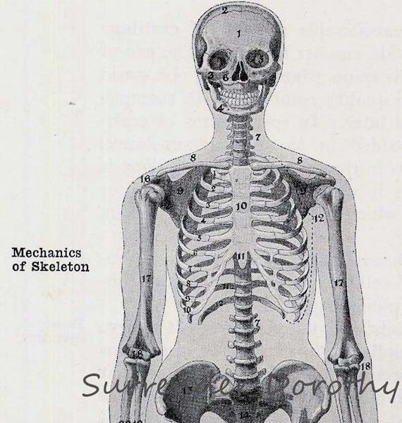 Chubby Skeleton Man Skeletal System Human Anatomy Chart 1930s Etsy