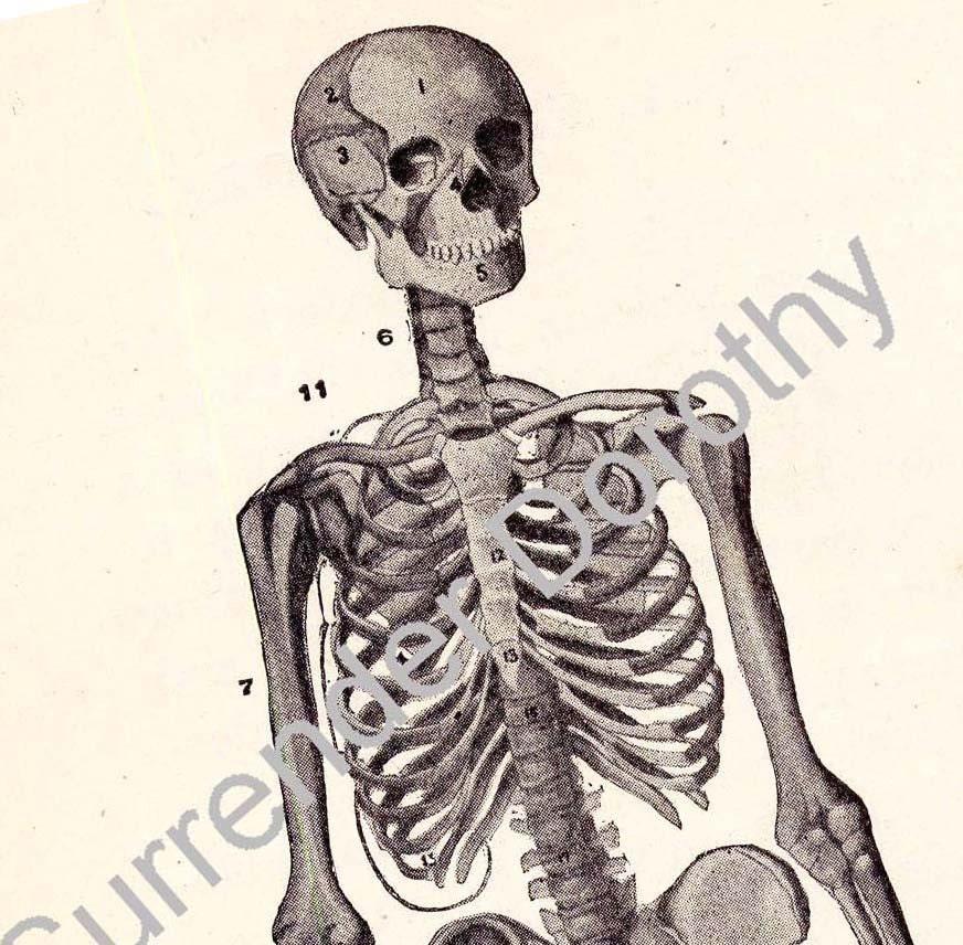 Skelett Mann menschlichen Anatomie Diagramm Skelettsystem | Etsy