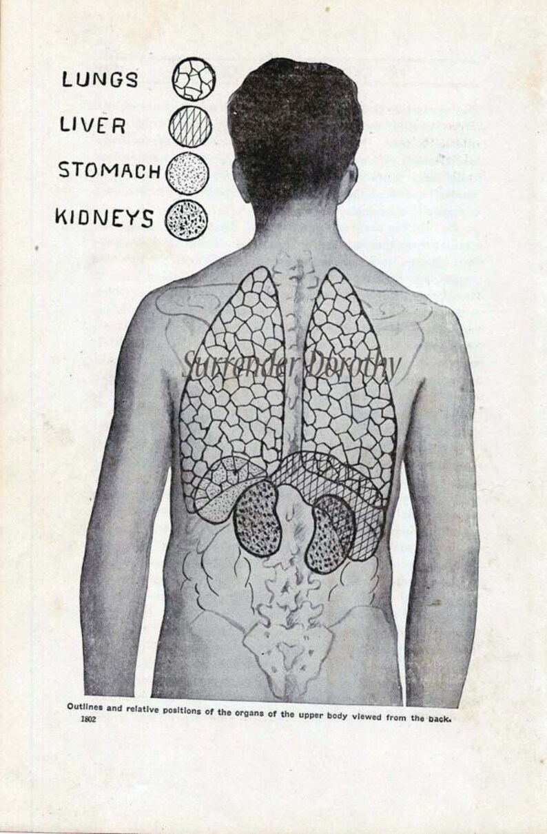 Human Organs Anatomy Chart Awesome Tattoo Dude 1920s Weird Etsy